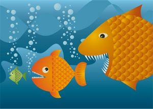 consolidation-fish